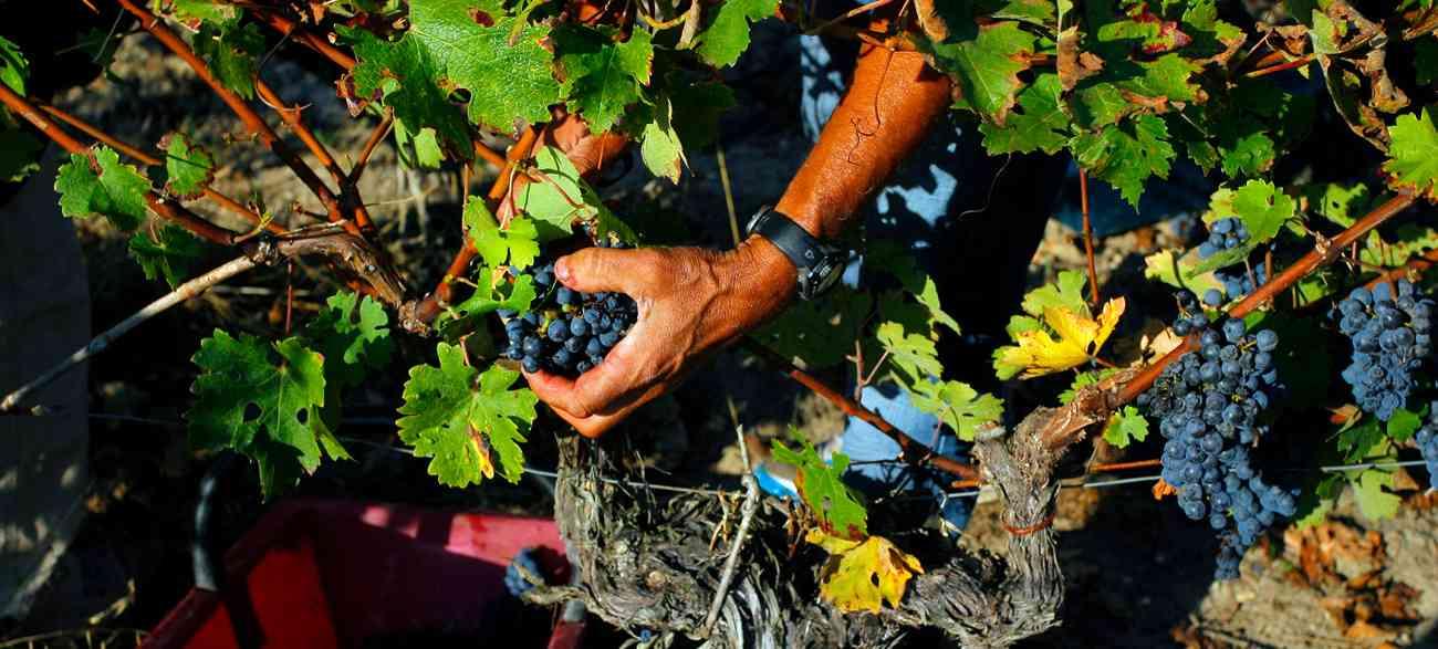 jardiniers de la vigne
