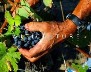 viticulture saint-emilion